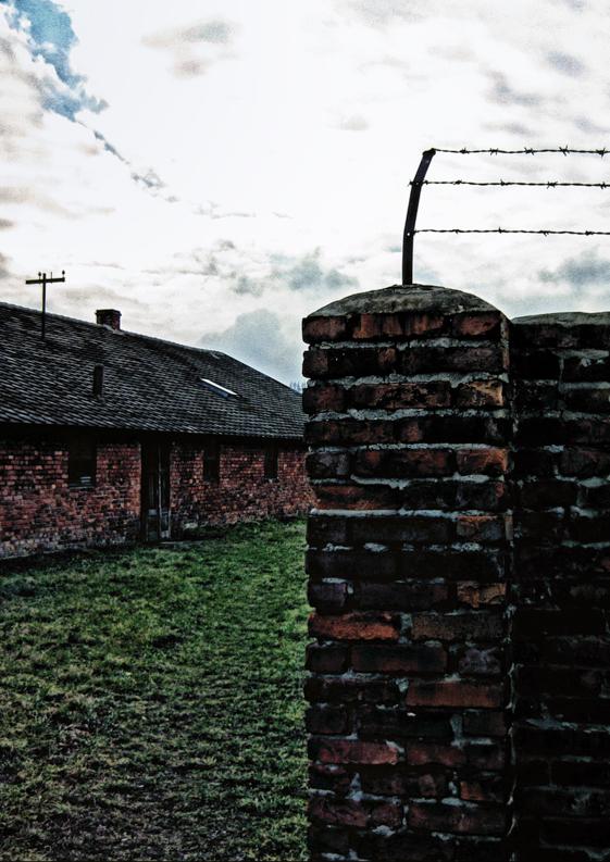 birkenau giorno della memoria