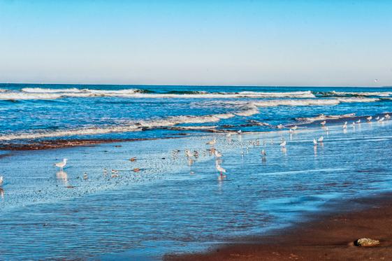 la tranche sur mer (6 di 11)