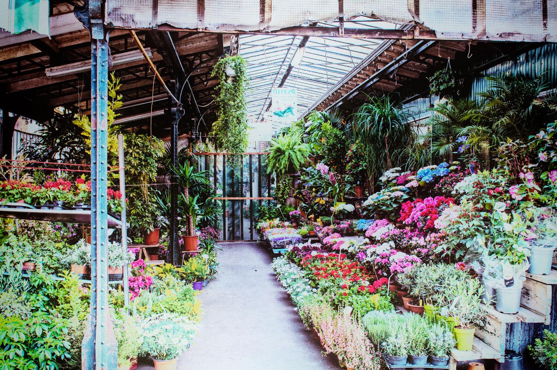 peca-studiogabriotomelleri-mercato dei fiori a Ile de la Cité