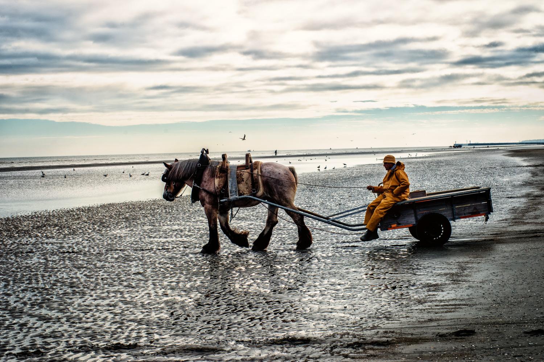 fiandre -studiogabriotomelleri-La pesca dei gamberetti a cavallo a Oostduinkerke nelle Fiandre
